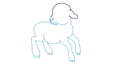 Drawing sheep step by. How to draw a