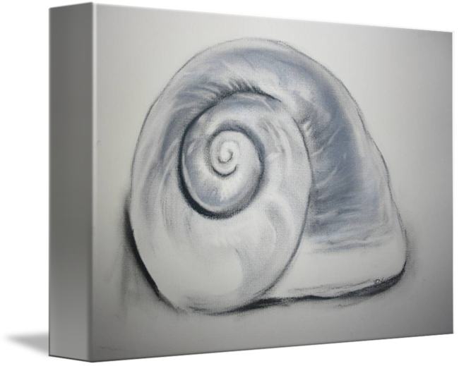 drawing shell charcoal