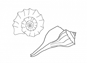 Drawing shells realistic. Sea coloring pages free