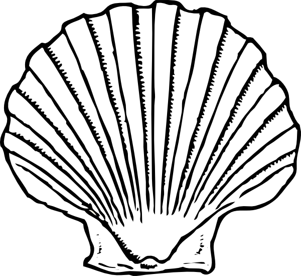 Shell transparent scallop background. Template with diy decor