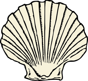 Drawing shell realistic. Scallop clip art tattoos