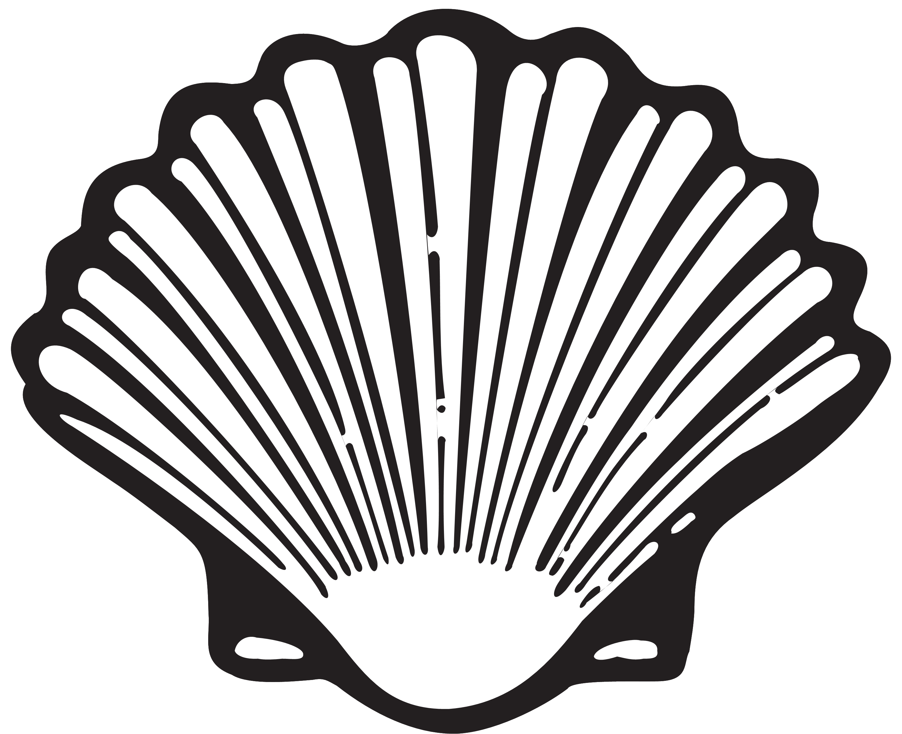 Drawing shell shape. The evolution of a
