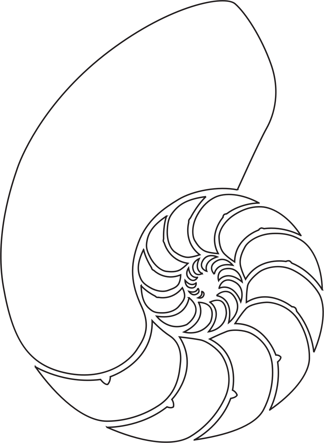 Drawing shell spiral. Nautilus by i dllc