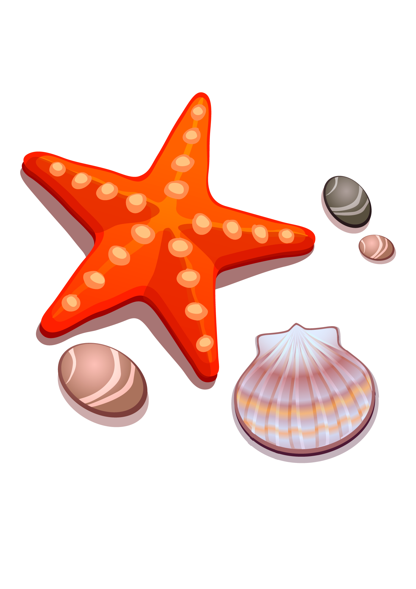 Drawing shells starfish. Cartoon seashell and transprent