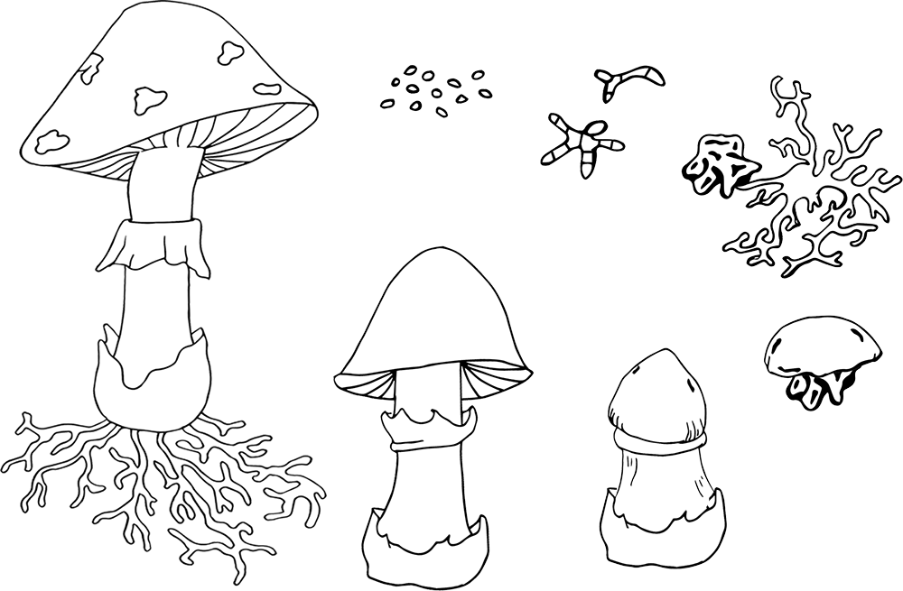Drawing shrooms label. Mushroom printables clipart homeschool