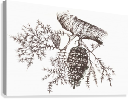 Pine drawing sketch. Of a cone hanging