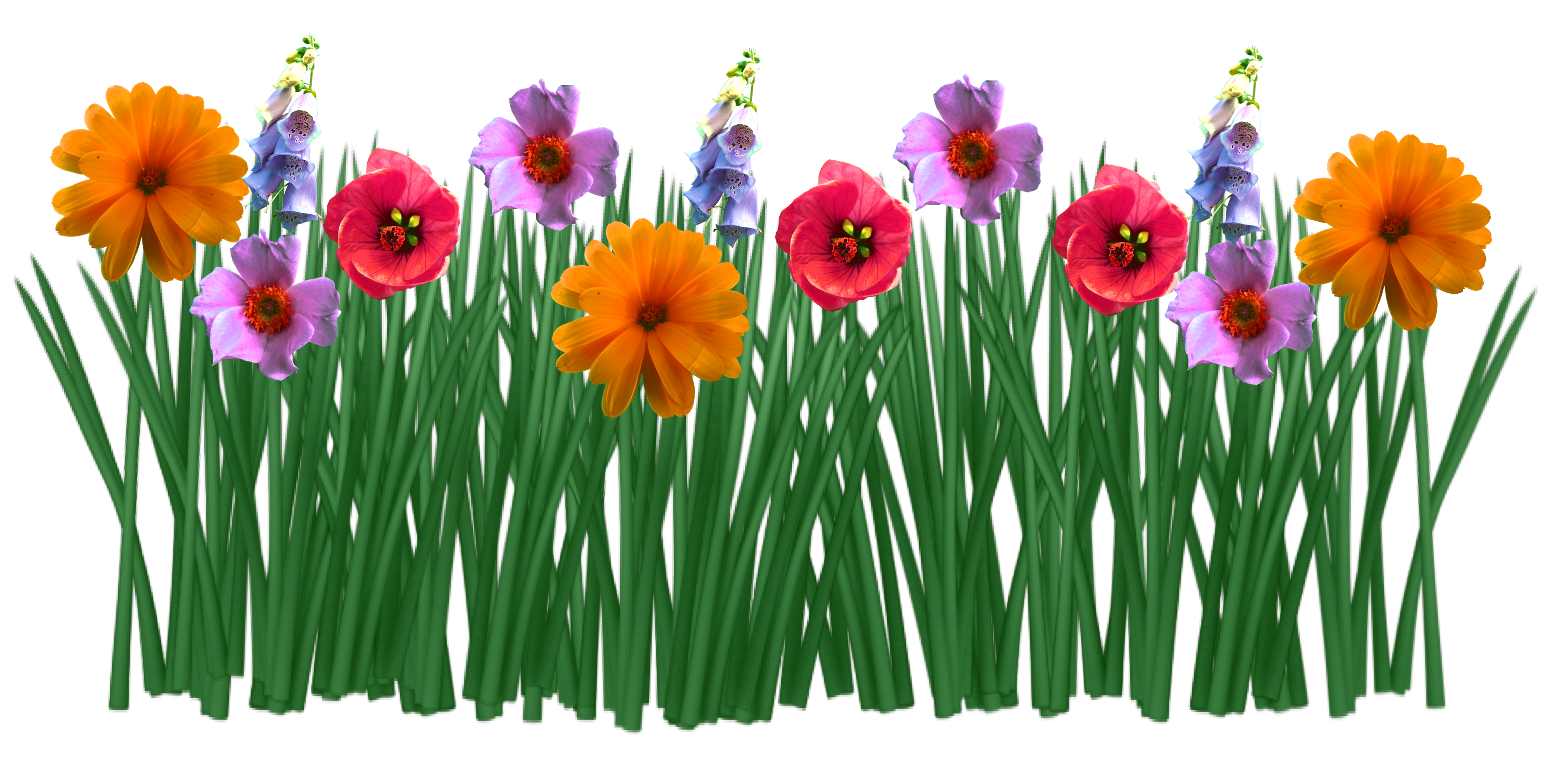 Drawing spring colorful. Flowers grass free image