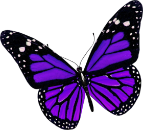 Drawing spring purple butterfly. Pin by kim persinger