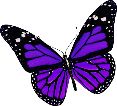 Drawing spring purple butterfly. Butterflies pinterest purplebutterfly