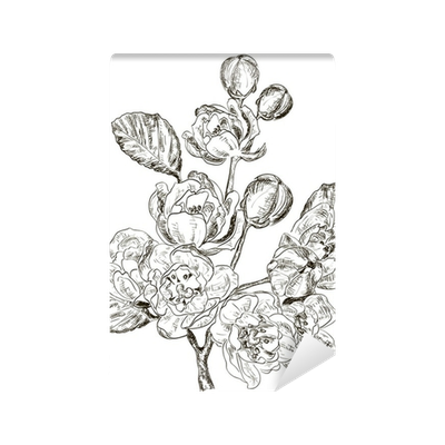 Drawing spring sketch. Of branch flower wall