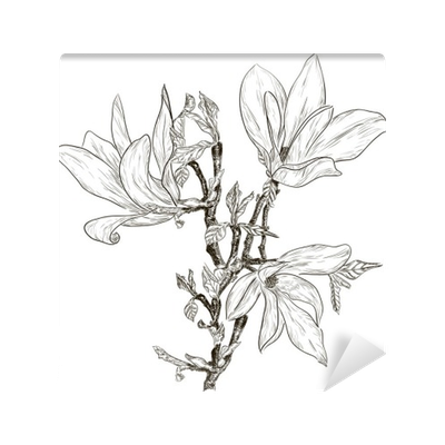 Drawing spring sketch. Hand magnolia blossoms wall