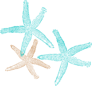 Drawing starfish artistic. Prints clip art pinterest
