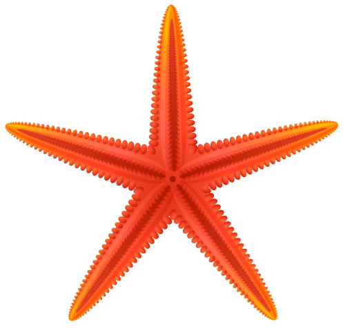 Drawing starfish beach. Red png clip art