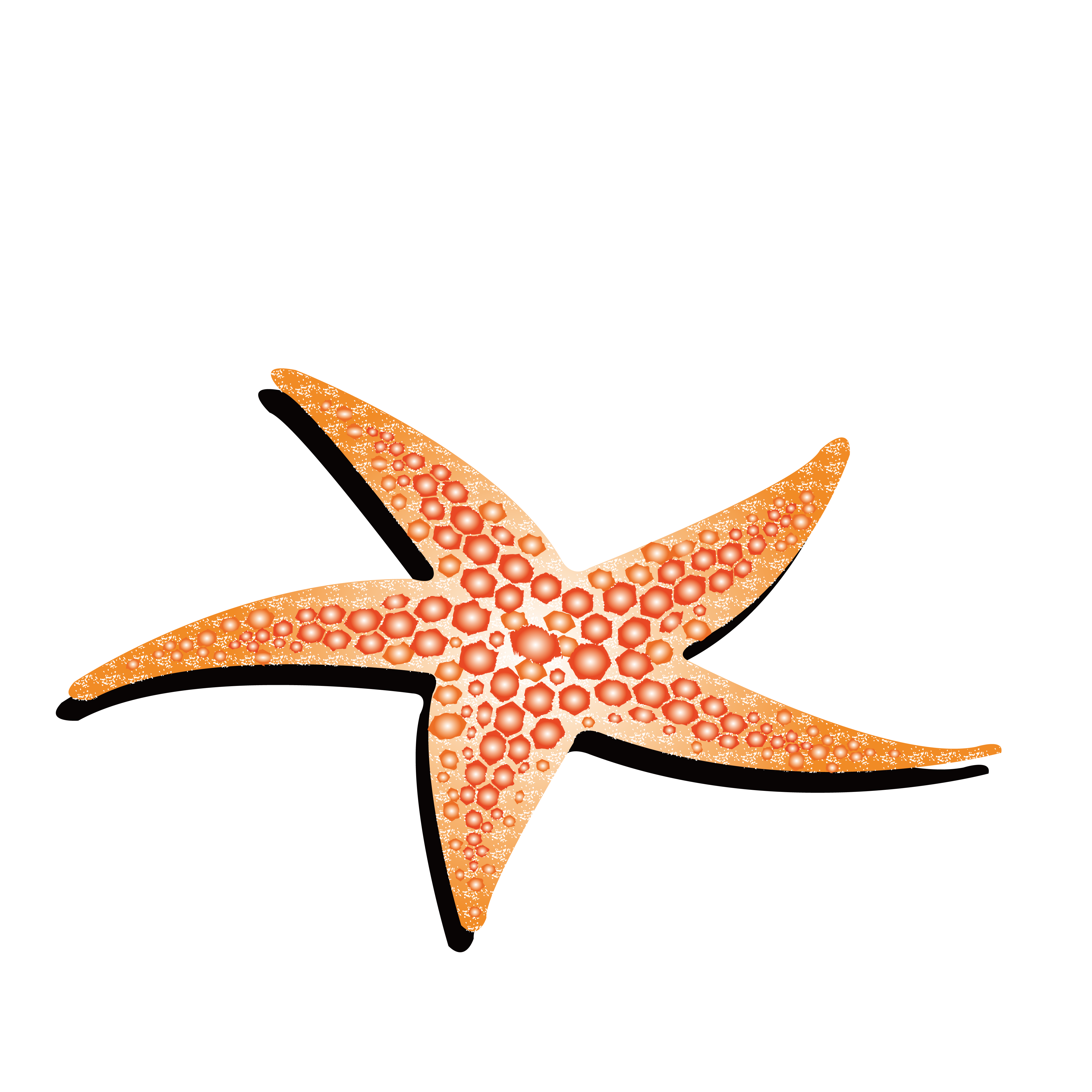 Drawing starfish colour. Animation yellow transprent png