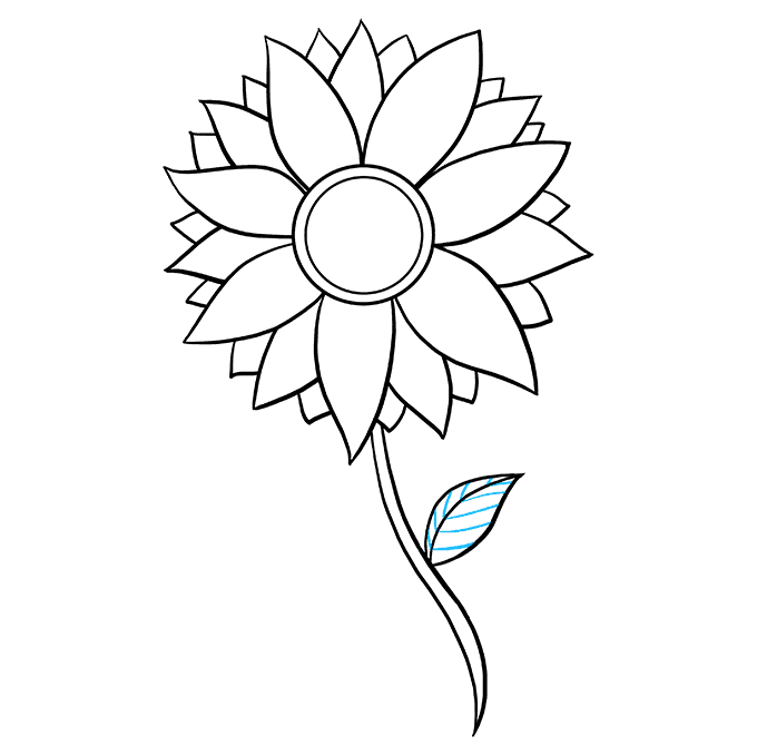 Stem drawing sunflower. How to draw a