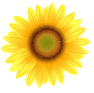 Drawing sunflowers center. Sunflower tutorial at getdrawings