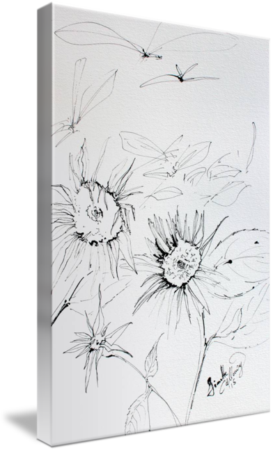 Drawing sunflowers ink. Expressive black on watercolor