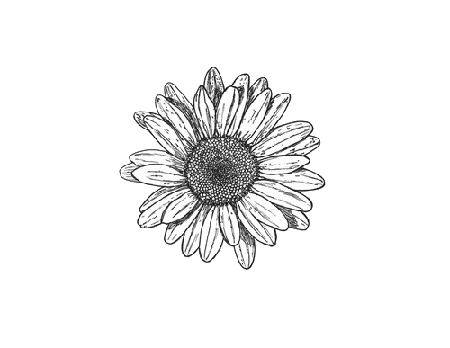Drawing sunflowers minimalist. Girasol tatoo pinterest tattoo