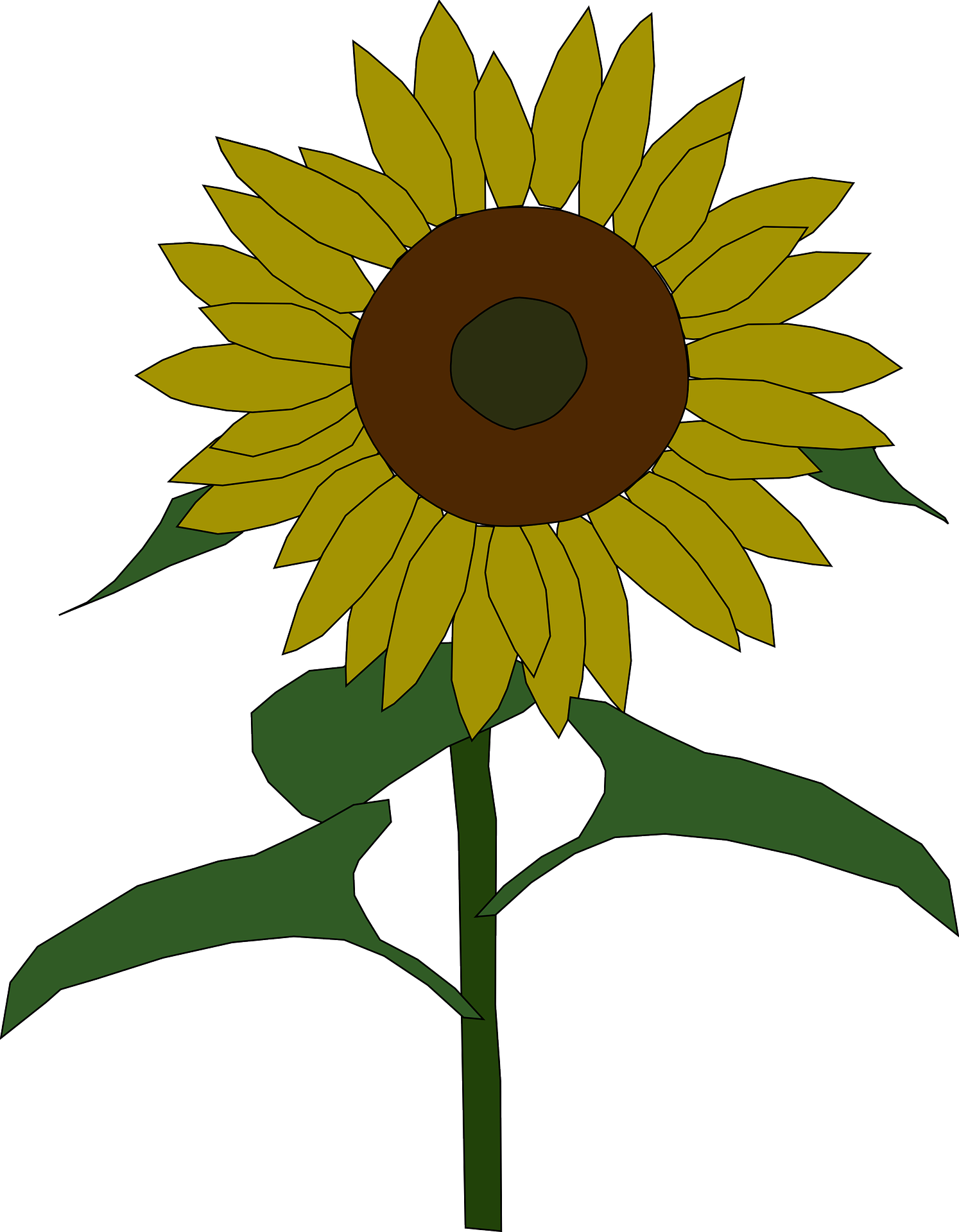 Stem drawing sunflower. Common seed clip art