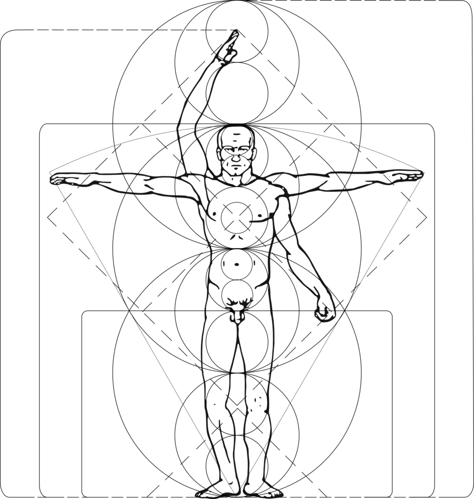 Drawing theory body. Humans how to know