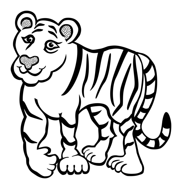 Drawing tigers. Felidae line art baby