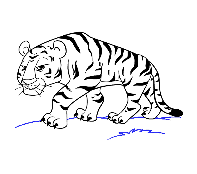How to draw a. Drawing tigers svg transparent