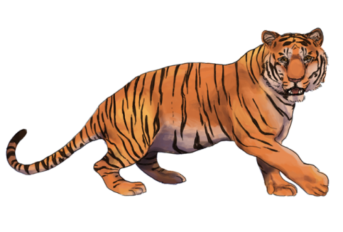 Drawing tigers grid. How to draw a