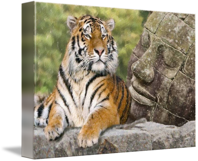 Tigers drawing pastel. Tiger and the buddha