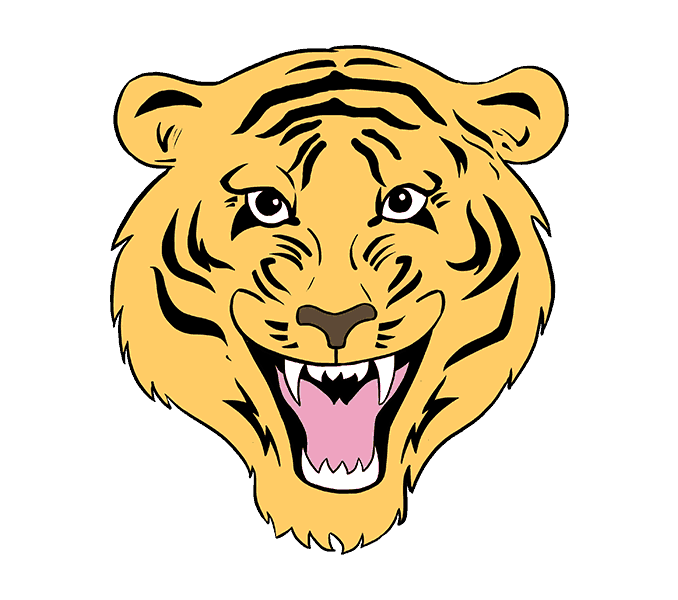 How to draw tiger. Drawing tigers clipart free library