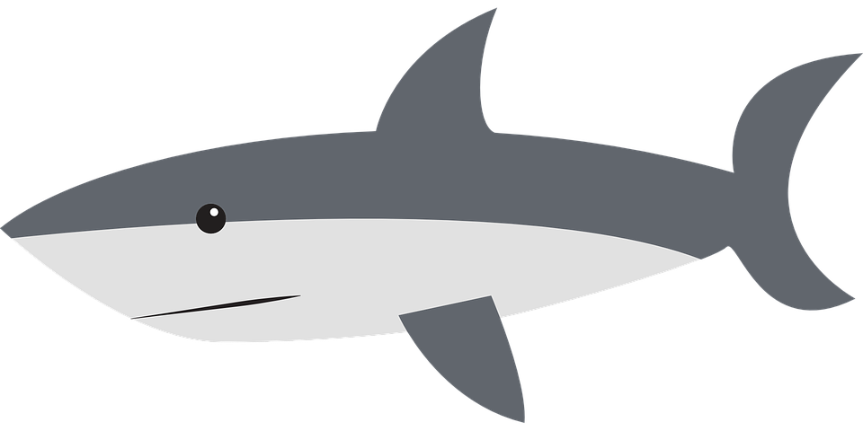 Vector sharks decal. Collection of shark