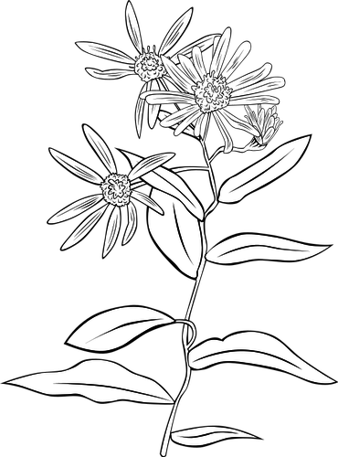 Drawing transparent line. Flower at getdrawings com