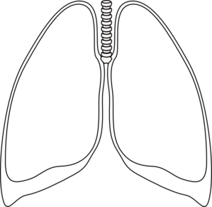 Drawing transparent lung. Collection of free lungs