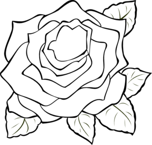 Drawing transparent outline. Totetude rose clip art