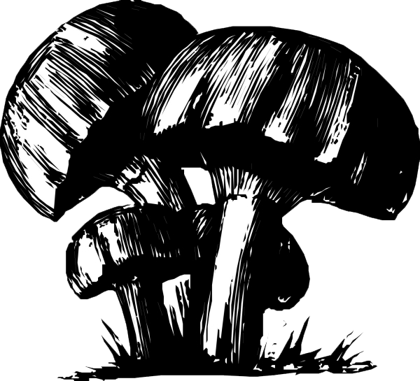 Drawing trippy mushroom. Black and white at