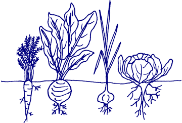 Drawing vegetable crop. Collection of crops