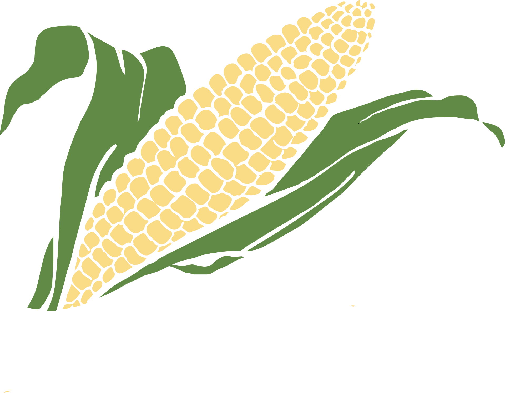 Drawing vegetable crop. Of corn free image