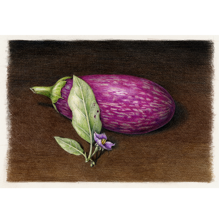 Drawing vegetables egg plant. Giclee print eggplant draw