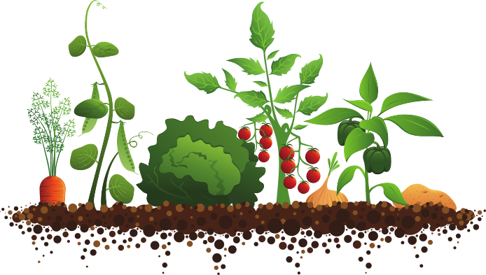 Drawing vegetable garden. Clipart vegetables graphics illustrations