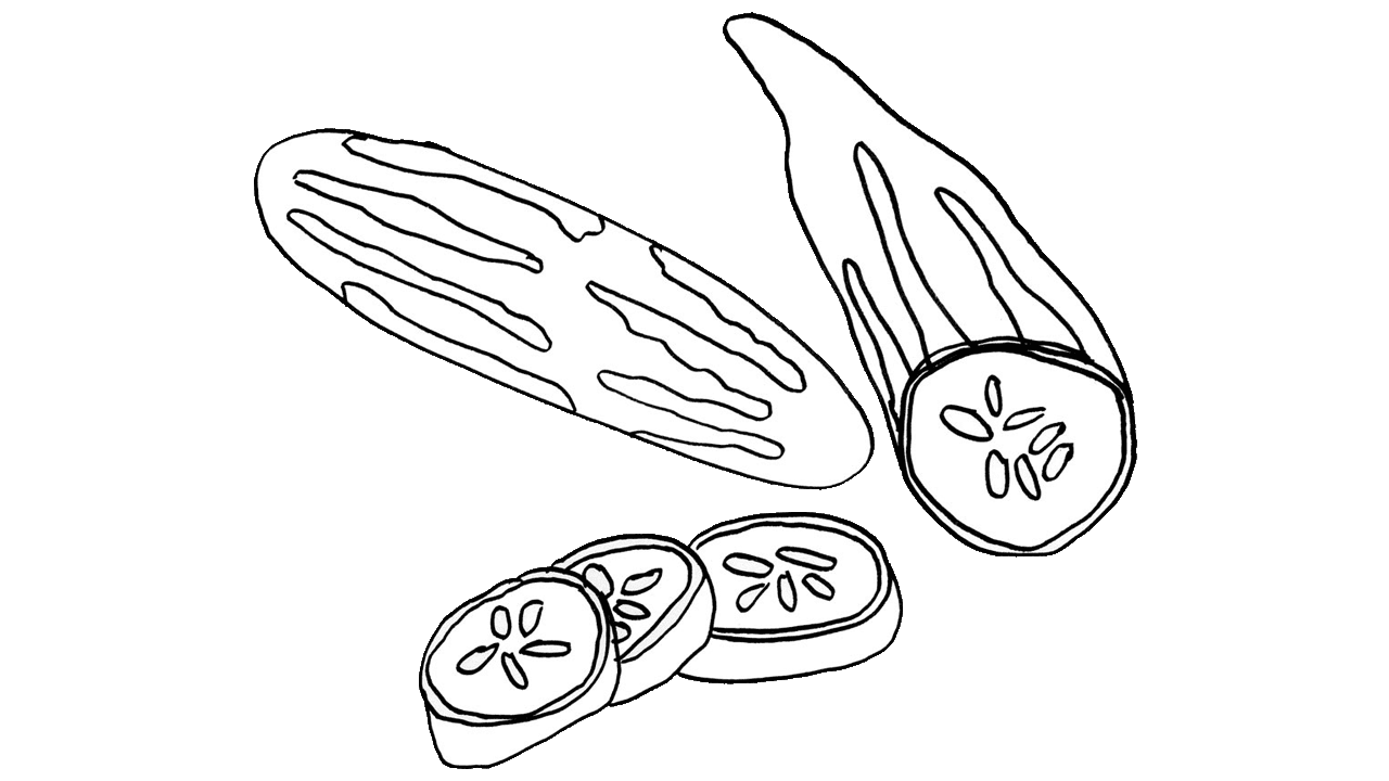 Drawing vegetable realistic. Cucumber fruit clip art