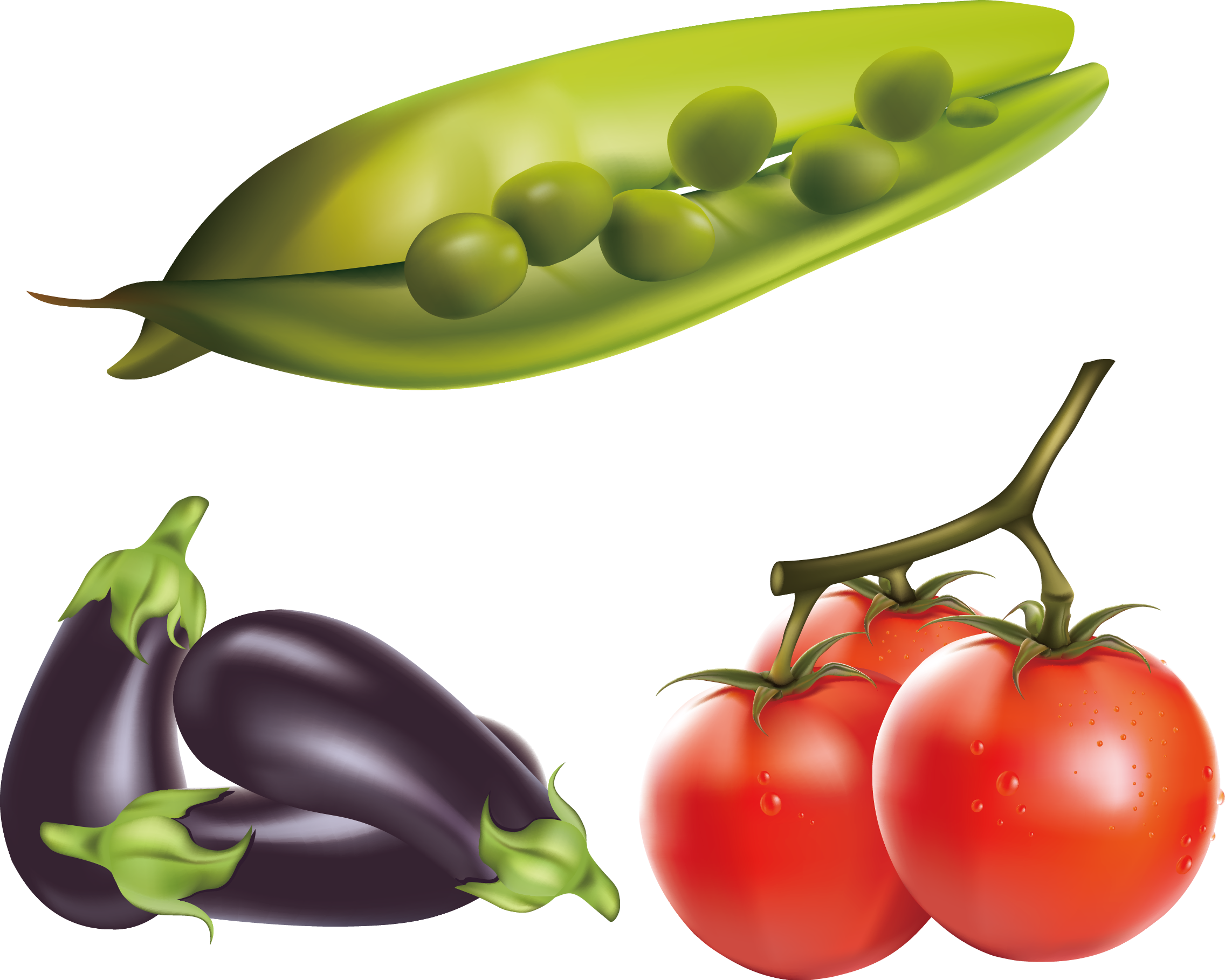 Drawing vegetable realistic. Eggplant tomato clip art