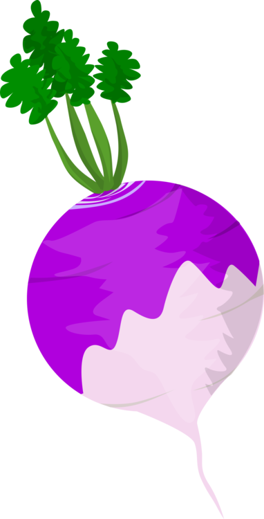 Radish vector turnip. Root vegetables computer icons