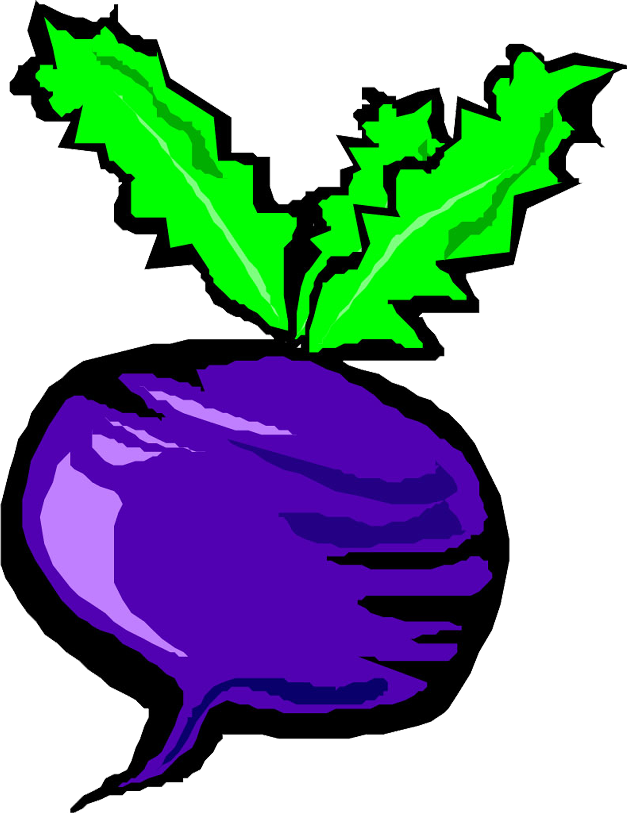 Drawing vegetables egg plant. Download banner free turnip