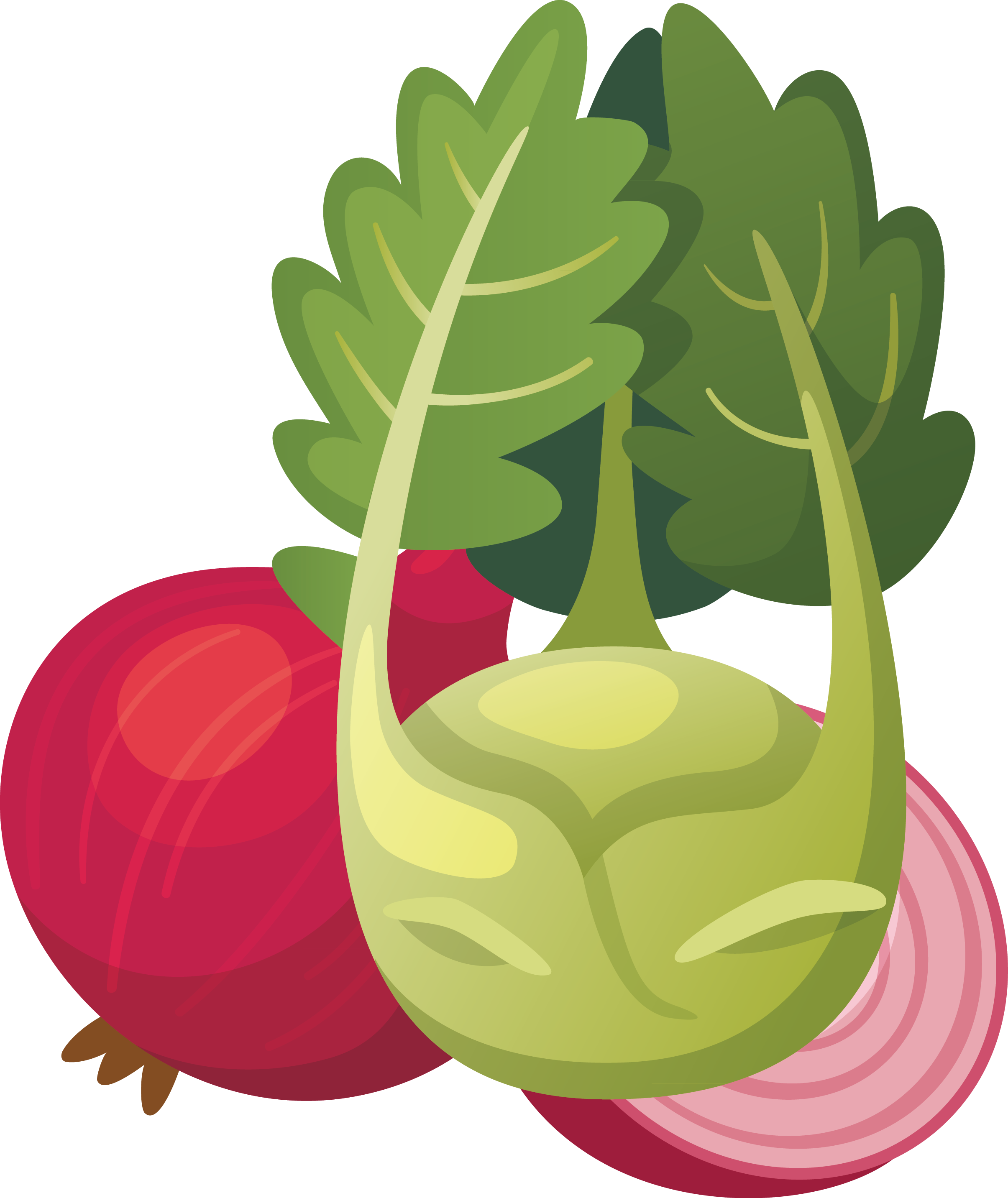 Radish vector turnip. Fruit vegetable gouache painting