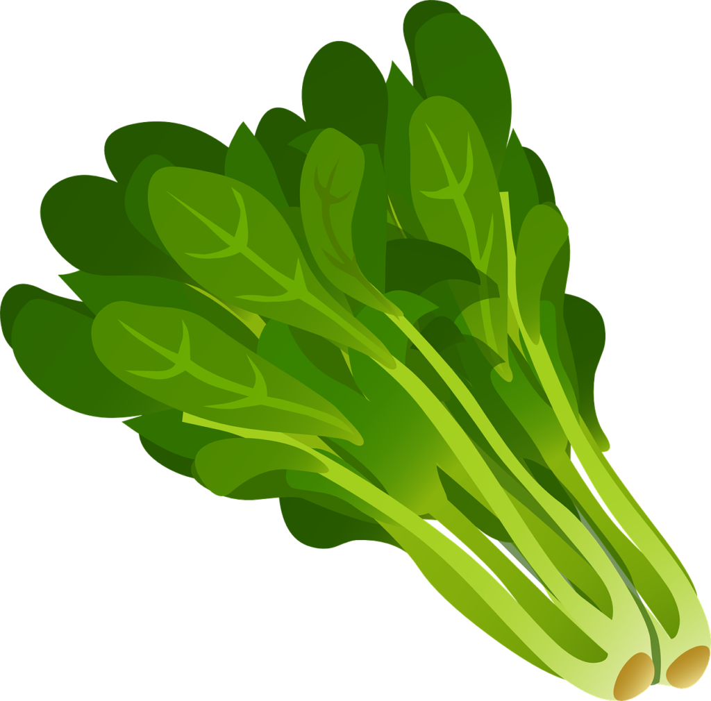 Drawing vegetables spinach. Clipart free download on