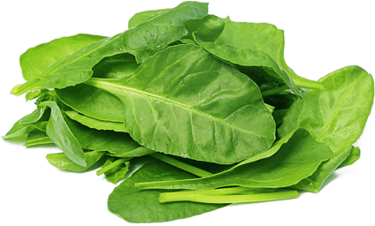Drawing vegetables spinach. Transparent png stickpng