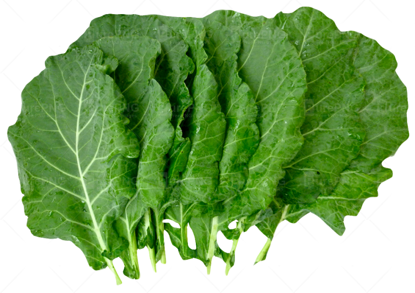 Drawing vegetables spinach. Collection of free collards