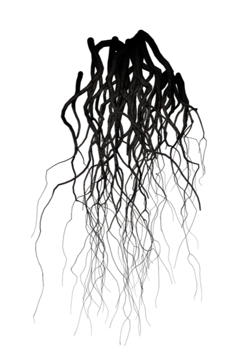 Drawing veins. Roots black tree nature