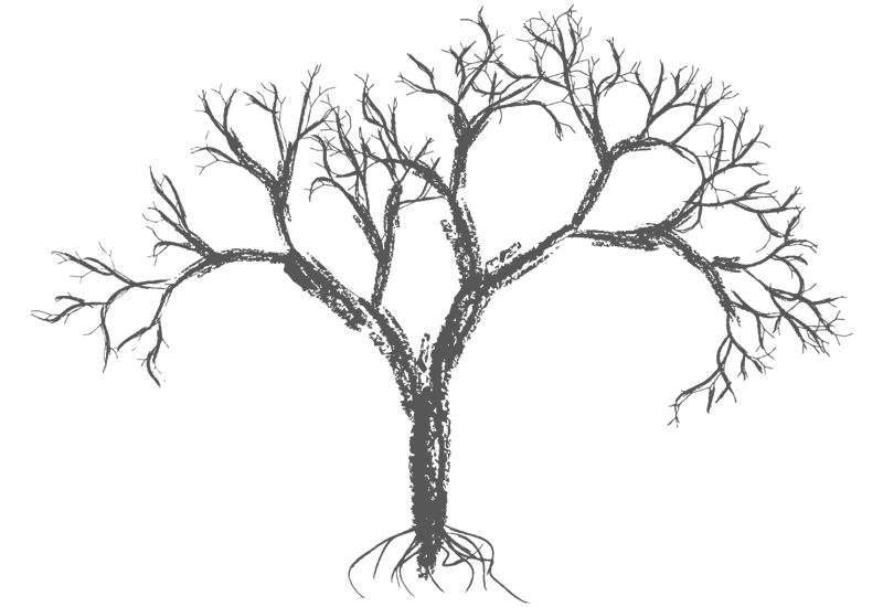 Drawing wall easy. Bare crayon tree decal
