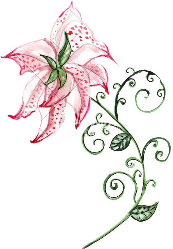 Drawing wallpapers watercolor. Hand of lily ornament
