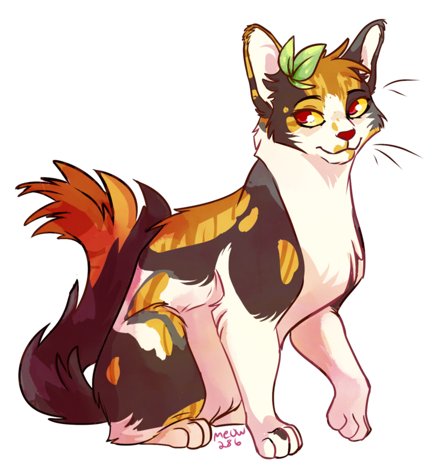 Anima drawing cat. Spottedleaf by meow deviantart
